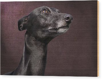 Wood Print featuring the photograph Beautiful Whippet Dog by Ethiriel  Photography