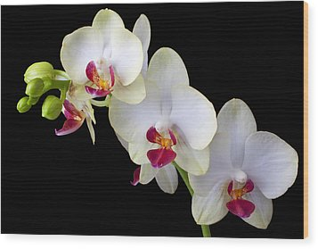Beautiful White Orchids Wood Print by Garry Gay