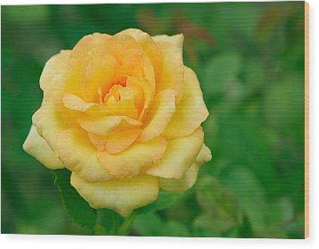 Beautiful Yellow Rose Wood Print by Atiketta Sangasaeng