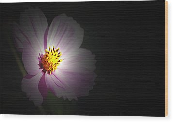 Wood Print featuring the photograph Beauty In Darkness by Amee Cave