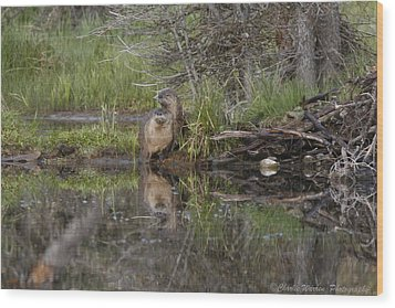 Beaver Pair Wood Print by Charles Warren