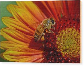 Bee 12 Wood Print by Mitch Shindelbower