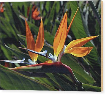 Bee And Bird Of Paradise Wood Print by Kevin Smith
