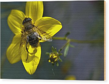 Bee At Rest Wood Print