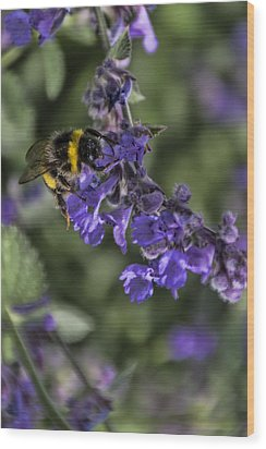Wood Print featuring the photograph Bee by David Gleeson