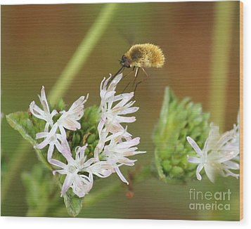 Bee Fly Don't Bother Me Wood Print