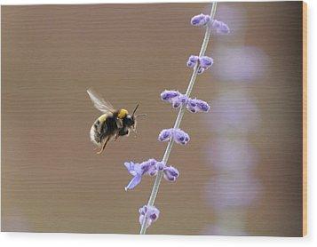 Bee Flying Towards Flowers Wood Print by Darren Moston