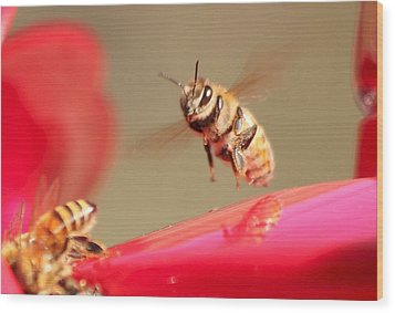 Bee In Flight Wood Print