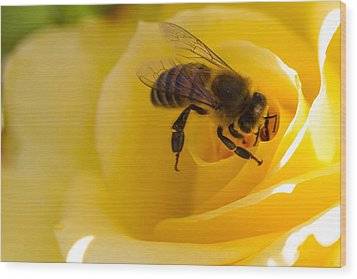 Bee Looking Down The Center Of A Yellow Rose Wood Print by Dina Calvarese