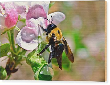 Wood Print featuring the photograph Bee On An Apple Blossom by Susan Leggett