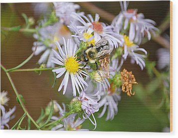Wood Print featuring the photograph Bee On Aster by Mary McAvoy
