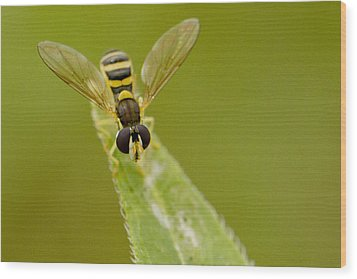 Bee On Belief  Wood Print by Dean Bennett