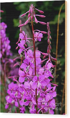Wood Print featuring the photograph Bee On Fireweed In Alaska by Kathy  White