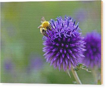 Bee On Garden Flower Wood Print