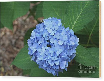 Wood Print featuring the photograph Bee On Hydrangea by Michael Waters