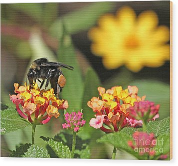 Wood Print featuring the photograph Bee On Lantana Flower by Luana K Perez