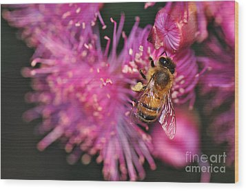Bee On Lollypop Blossom Wood Print by Kaye Menner