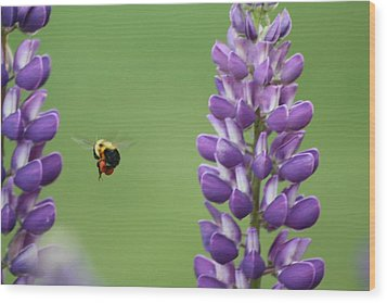 Bee On Lupine 2 Wood Print
