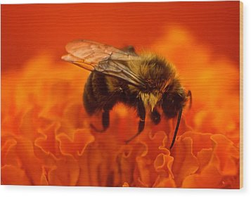 Bee On Orange Flower Wood Print