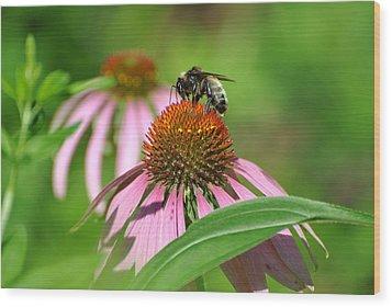 Bee On Pink Flower Wood Print
