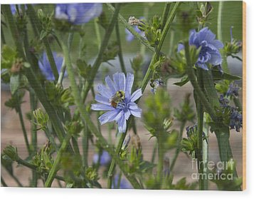 Bee On Romaine Flower Wood Print by Donna Munro