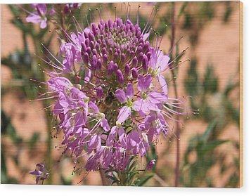 Bee Plant Wood Print