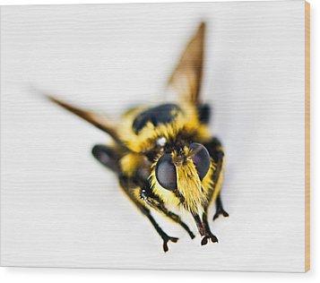 Bee Wood Print by Susan Leggett