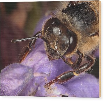 Wood Print featuring the photograph Bee Up Close And Personal by Charles Dana