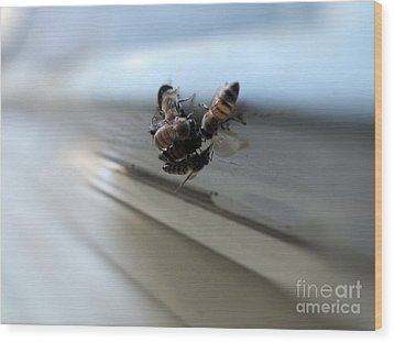 Bee Watering Hole Wood Print by Tammy Herrin