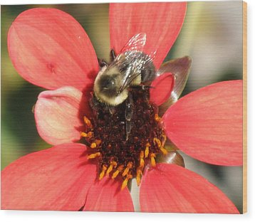 Bee With Flower Wood Print