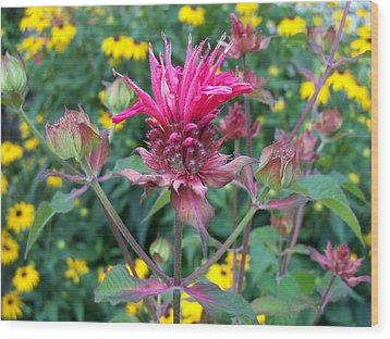 Beebalm Flower Wood Print