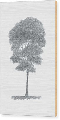 Beech Tree Drawing Number One Wood Print by Alan Daysh