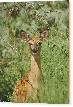 Being Watched Wood Print by Ernie Echols