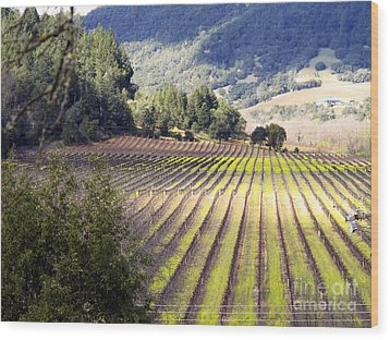 Wood Print featuring the photograph Bella Vineyards by Leslie Hunziker