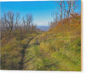 Belleayre Trail In Late Fall Wood Print by Kathryn Barry