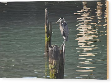 Wood Print featuring the photograph Bellingham Heron by Ronda Broatch
