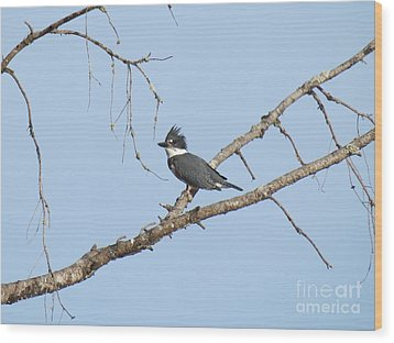 Belted Kingfisher Wood Print by Gayle Swigart
