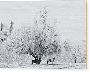 Beneath A Frosty Canopy Wood Print by Mike  Dawson