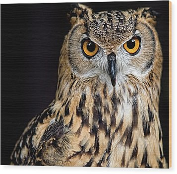 Bengal Eagle Owl Stare Wood Print by Andrew JK Tan