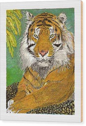 Bengal Tiger With Green Eyes Wood Print by Jack Pumphrey