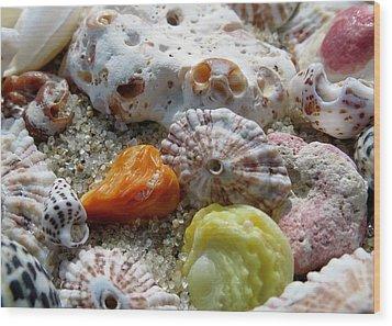 Bermuda Beach Shells Wood Print by Janice Drew