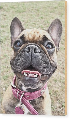 Wood Print featuring the photograph Best Friend by Jeannette Hunt