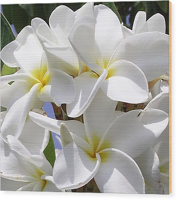 Best Plumeria Wood Print by Karen Nicholson