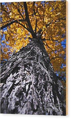 Big Autumn Tree In Fall Park Wood Print by Elena Elisseeva