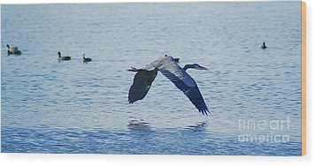 Wood Print featuring the photograph Big Blue Heron Flying Away From Me by John  Kolenberg