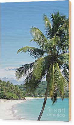 Wood Print featuring the photograph Big Corn Island Palm Tree Nicaragua by John  Mitchell