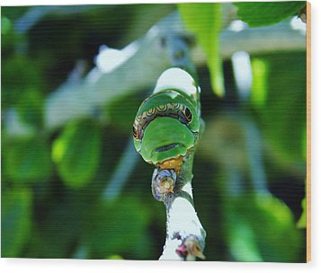 Big Green Caterpillar Wood Print by Werner Lehmann