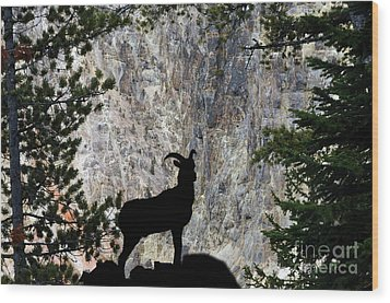 Wood Print featuring the photograph Big Horn Sheep Silhouette by Dan Friend