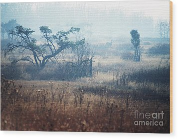 Big Meadows In Winter Wood Print by Thomas R Fletcher
