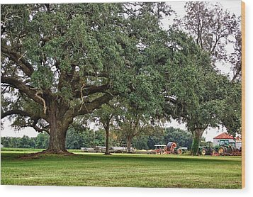 Big Oak And The Tractors Wood Print by Michael Thomas